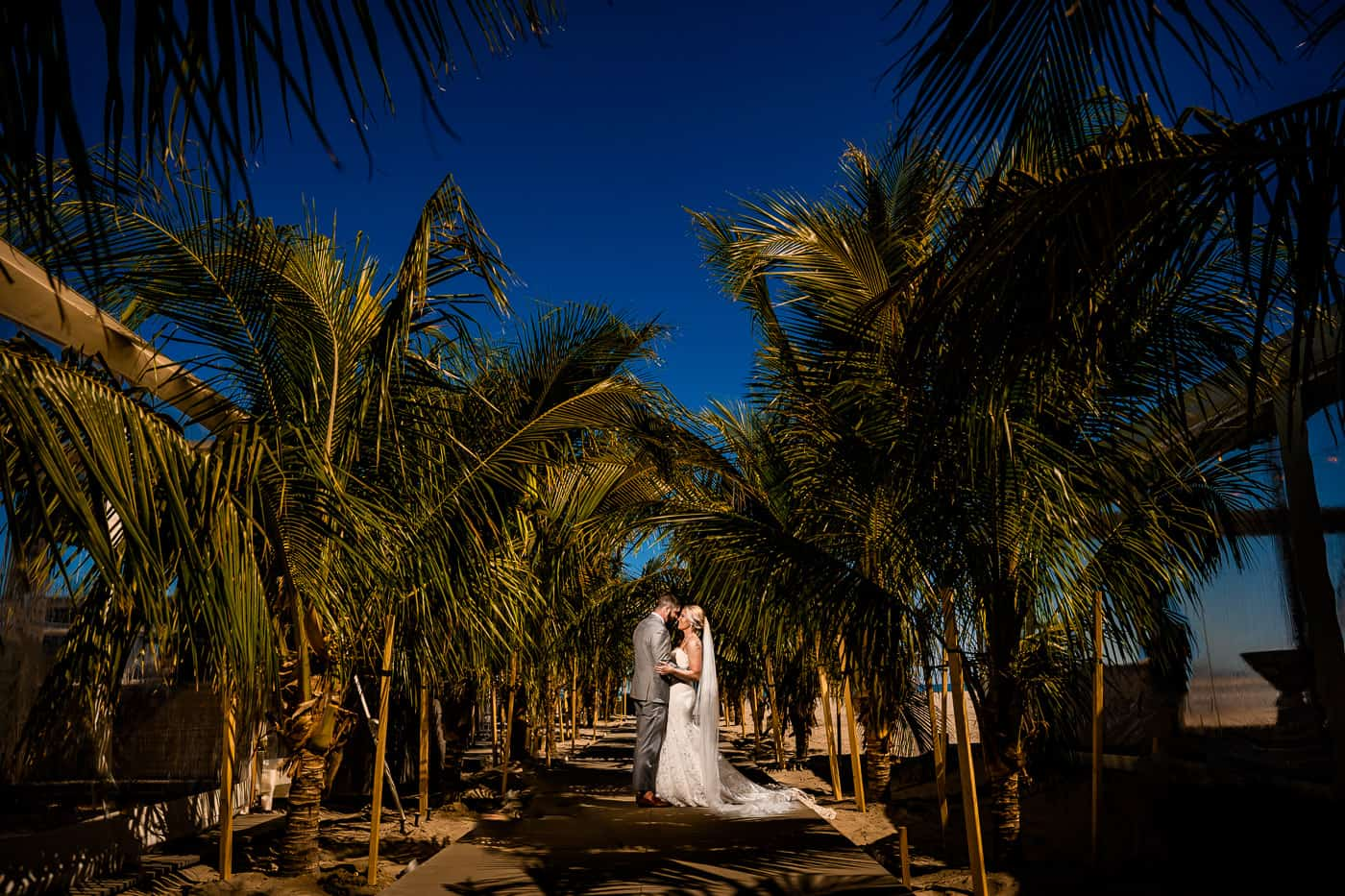 Bride and groom under palm trees at Icona Diamond Beach in Wildwood crest nj